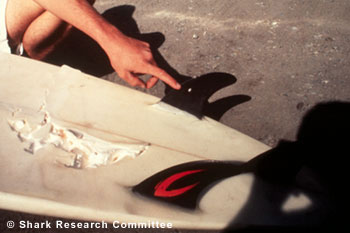 ' ' from the web at 'http://sharkresearchcommittee.com/images/R-swan-surfboard-3.jpg'